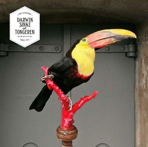 Toucan by Darwin, Sinke & van Tongeren