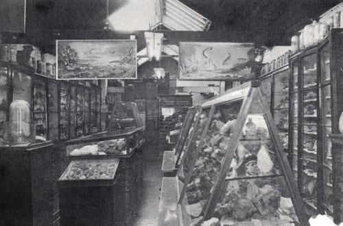 Gregory & Bottley stockroom in the 1930s