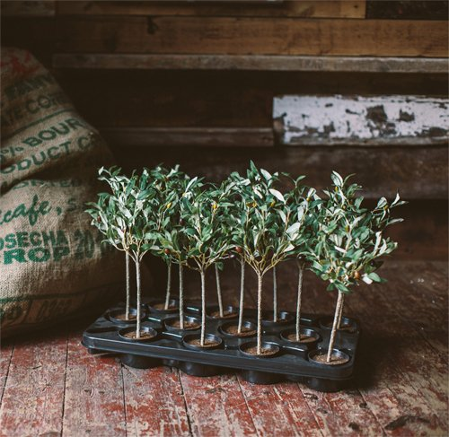 Faux mini olive trees from The Olive Tree