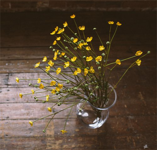 Faux buttercups from The Olive Tree